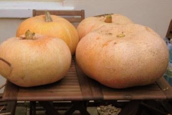 4_pumpkins_2102x1401_2